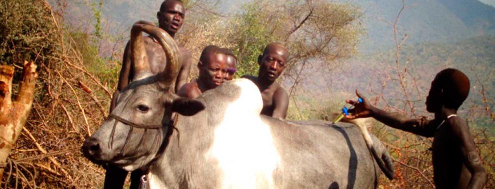 Impfkamapagne gegen Rinderseuche bei den Meinit (Äthiopien)
